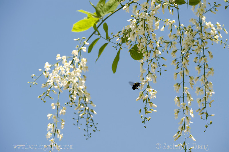 Two Trees Blooming With Kentucky In Their Names Bee The Best